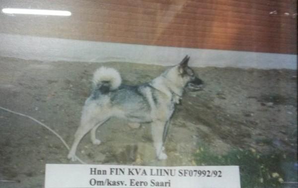 Hnn FIN KVA Liinu