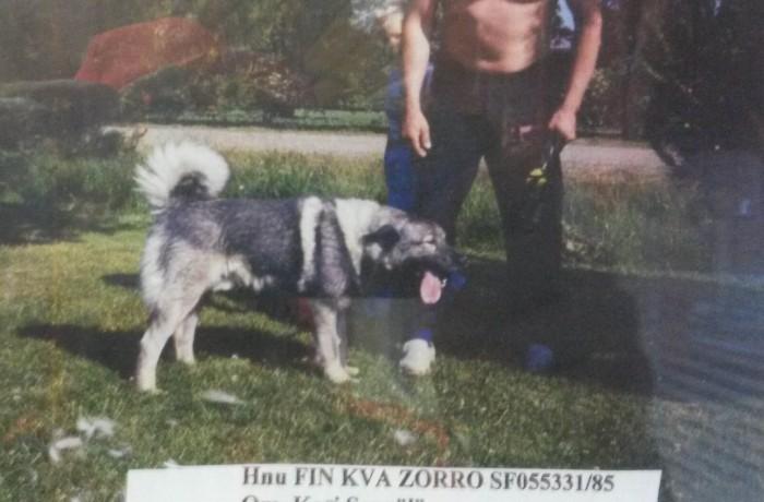 Hnu FIN KVA Tervakallion Zorro
